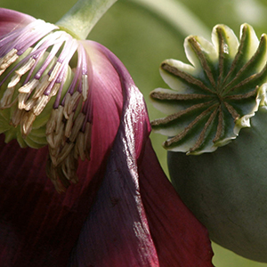 Botanical Gardens of the Ozarks